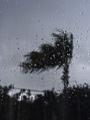 降るのは雨の八丈島