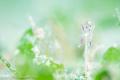 ウミヒルモの花が満開です♪