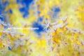 色彩と生態の狭間