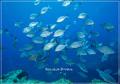 豆南諸島報告