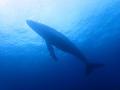 年末ジャンボの当たりはクジラ!