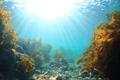 海藻パワー