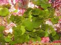 海藻はヤバイ!